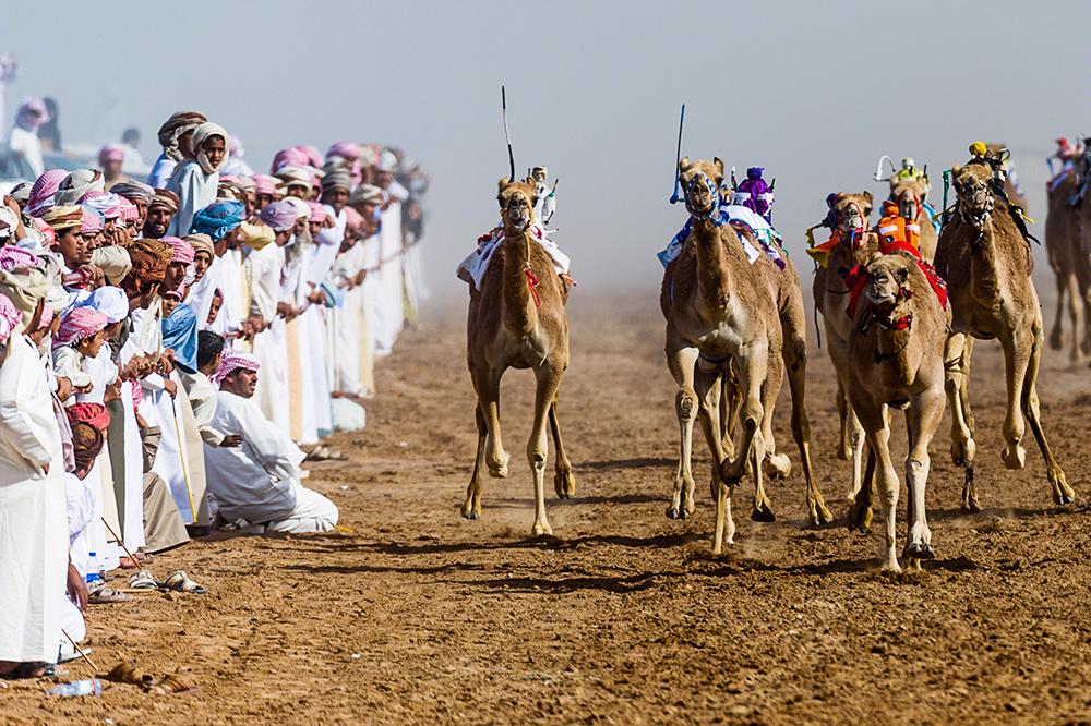 Vanishing & Emerging Cultures, louvor, Jason Edwards (Austrália): Corrida de camelos em Omã