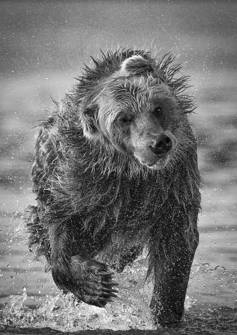 Monocromático, imagem isolada, menção honrosa, Marco Urso (Itália): Lago Kurile, Rússia