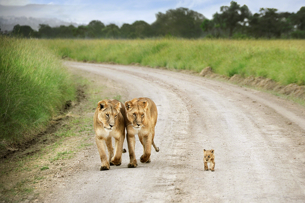 One Shot, louvor, David Lazar (Austrália): Masai Mara, Quénia