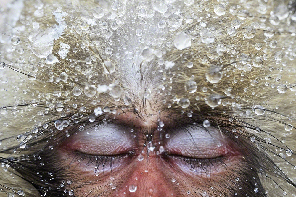 Wild Stories, vencedor (ex-aequo), Jasper Doest  (Holanda): Um macaco japonês em Yamanouchi, Nagano (Japão)