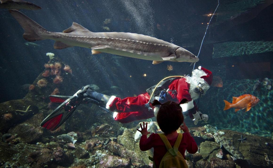 Canadá, no aquário de Vancouver