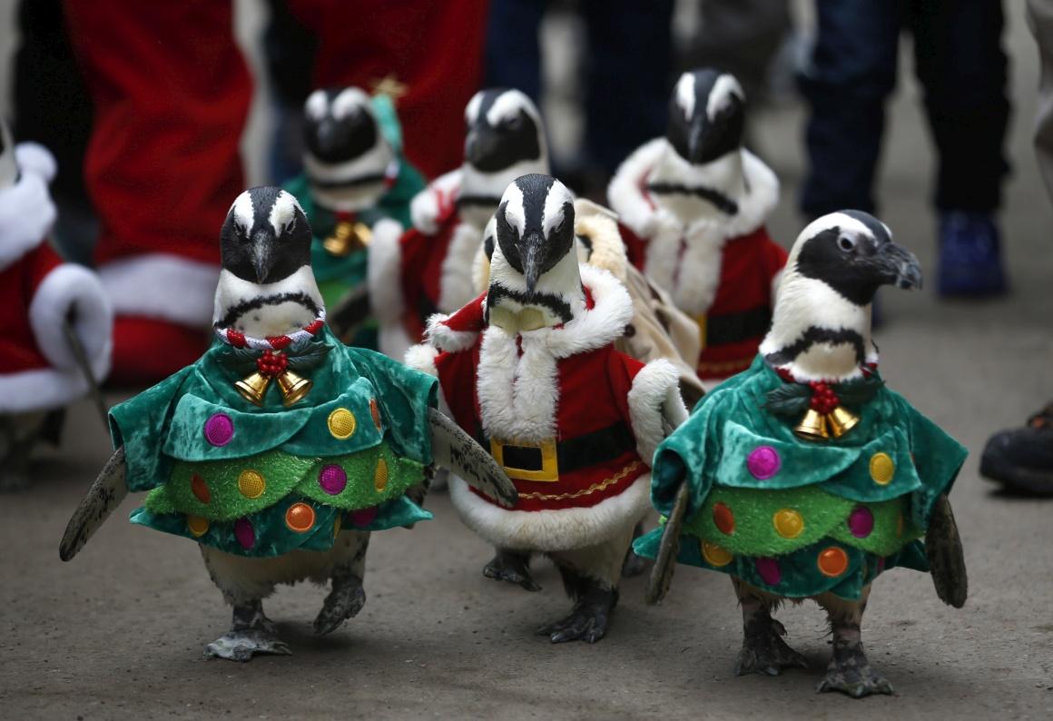 Coreia do Sul, Seul. Pinguins-Pai-Natal? Sim, parte de um evento promocional de um parque em Yongin