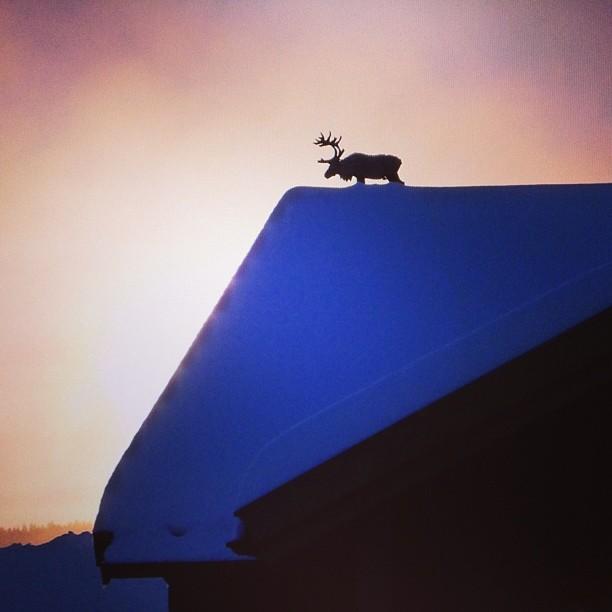 Real onírico: uma rena no telhado, uma imagem divulgada no Instagram do hotel