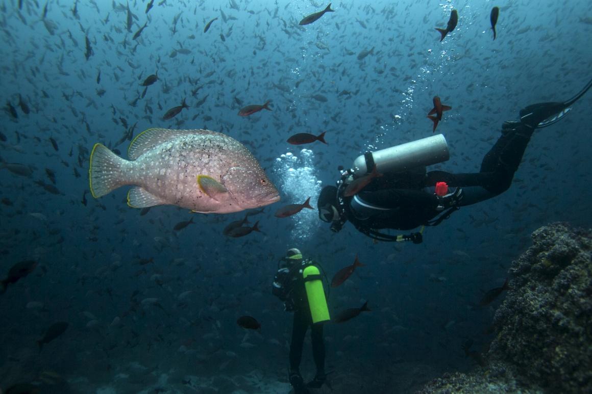 EQUADOR, 19.09.2013. Na reserva marinha de Galápagos