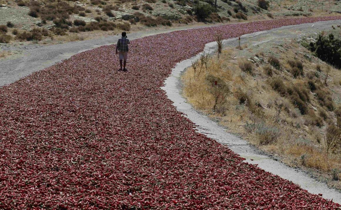 TURQUIA, 12.09.2013. Uma estrada de pimentas a secar ao sol, em Kilis