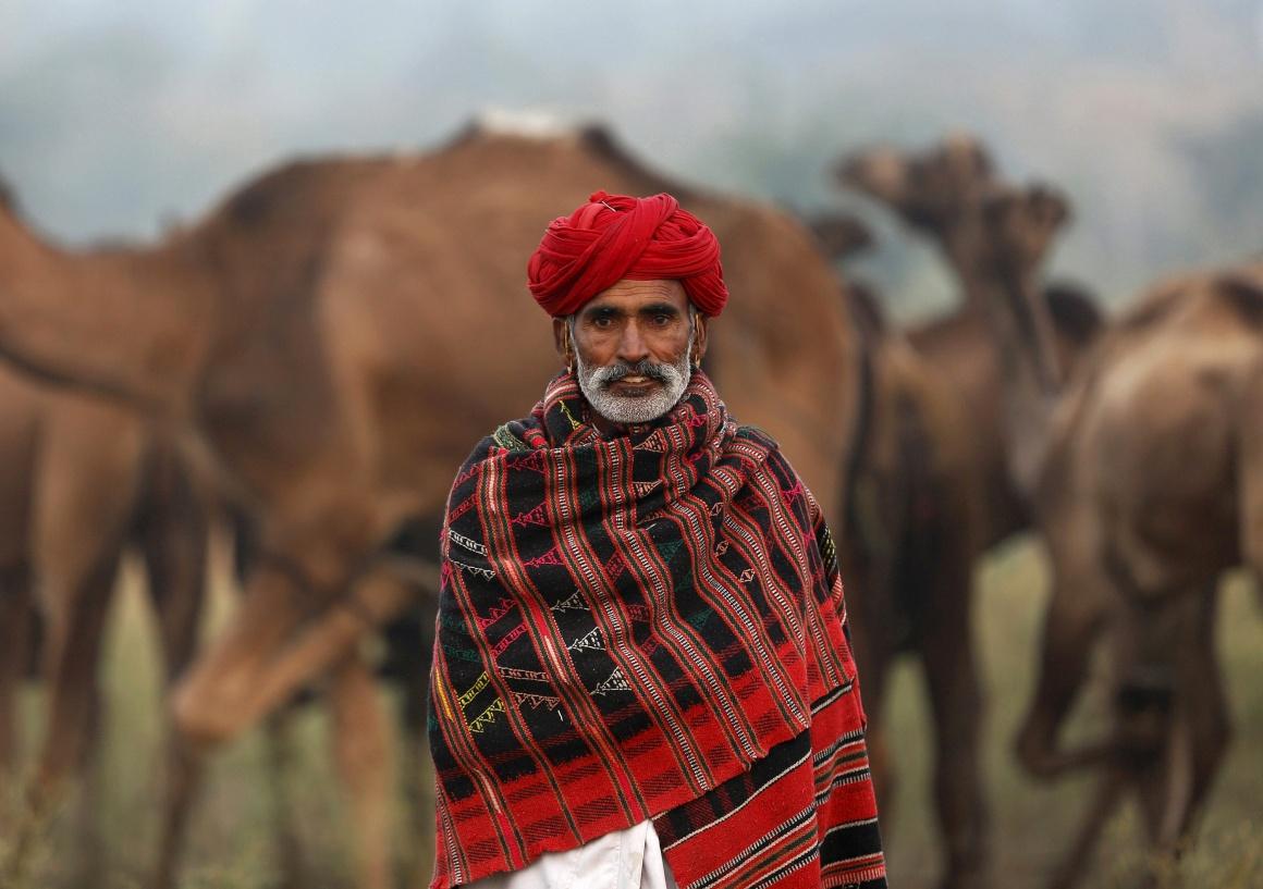ÍNDIA, 10.11.2013. Na grande feira de Pushkar, no Rajastão, onde os camelos são uma das atracções maiores (para venda e corridas)