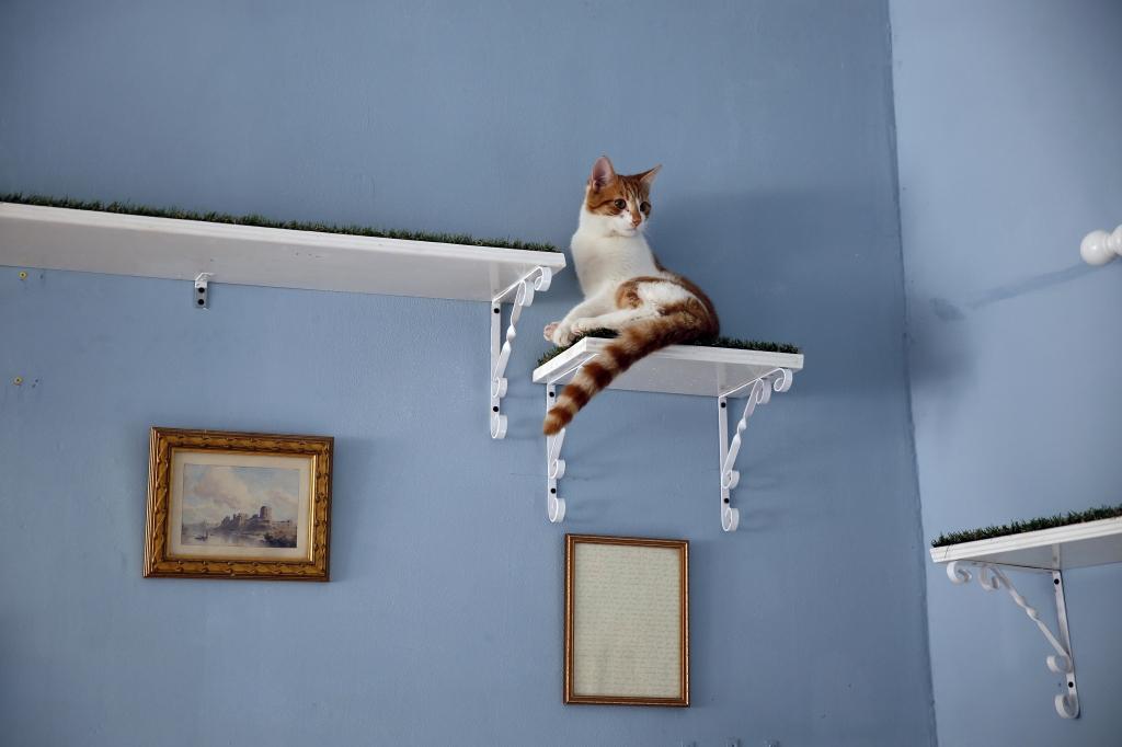 O café de gatos de Londres