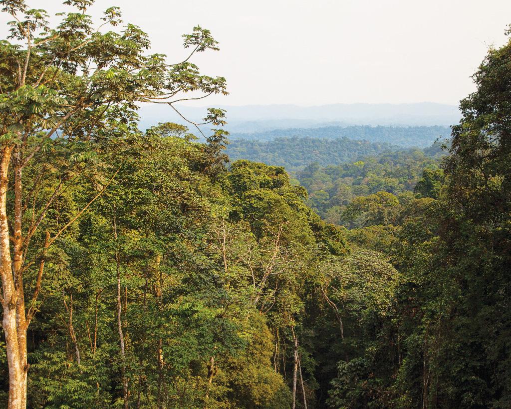 Eleita: Floresta do Maiombe, em Cabinda