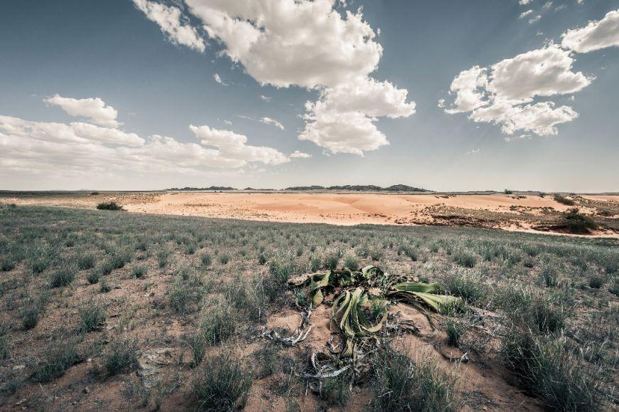 Finalista: Deserto do Namibe, Namibe