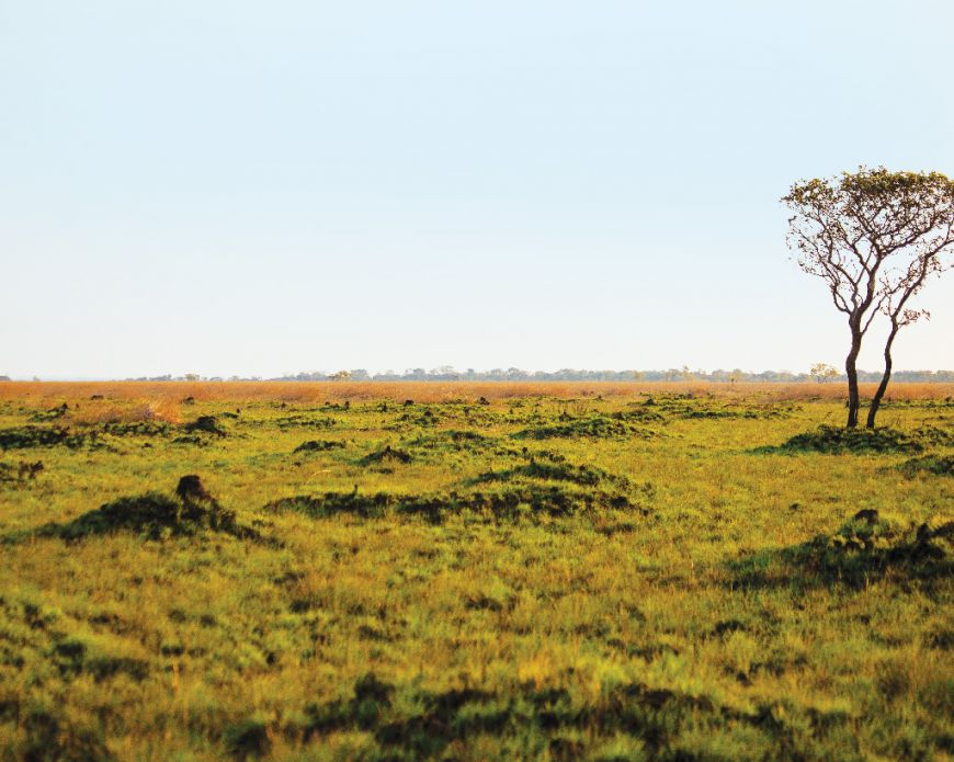 Finalista: Parque Nacional da Cameia, Moxico