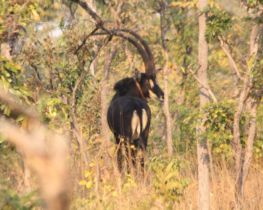 Finalista: Parque Nacional de Kangandala, Malange