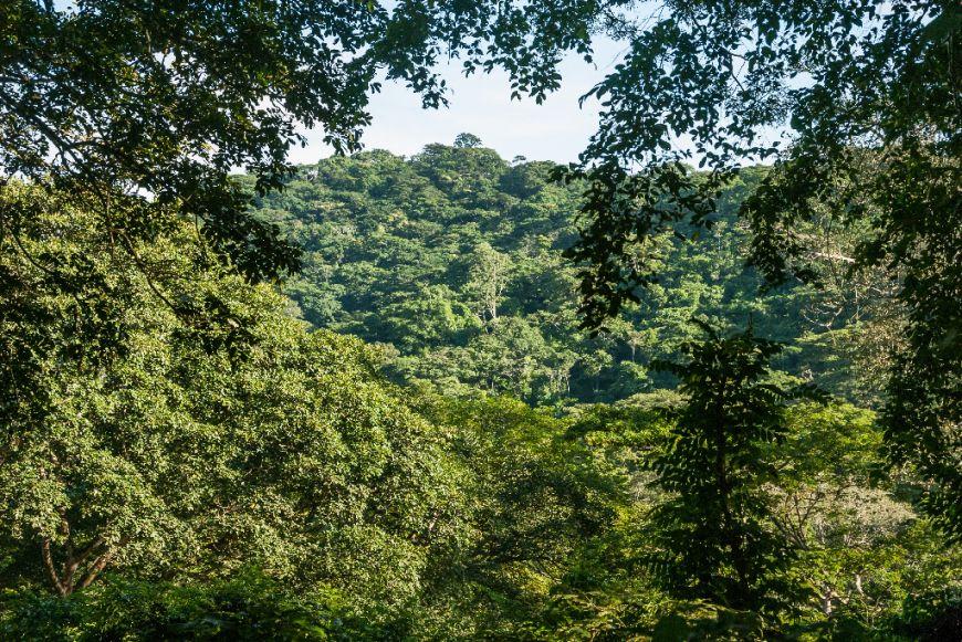 Finalista: Reserva Florestal do Golungo - Alto, Cuanza Norte