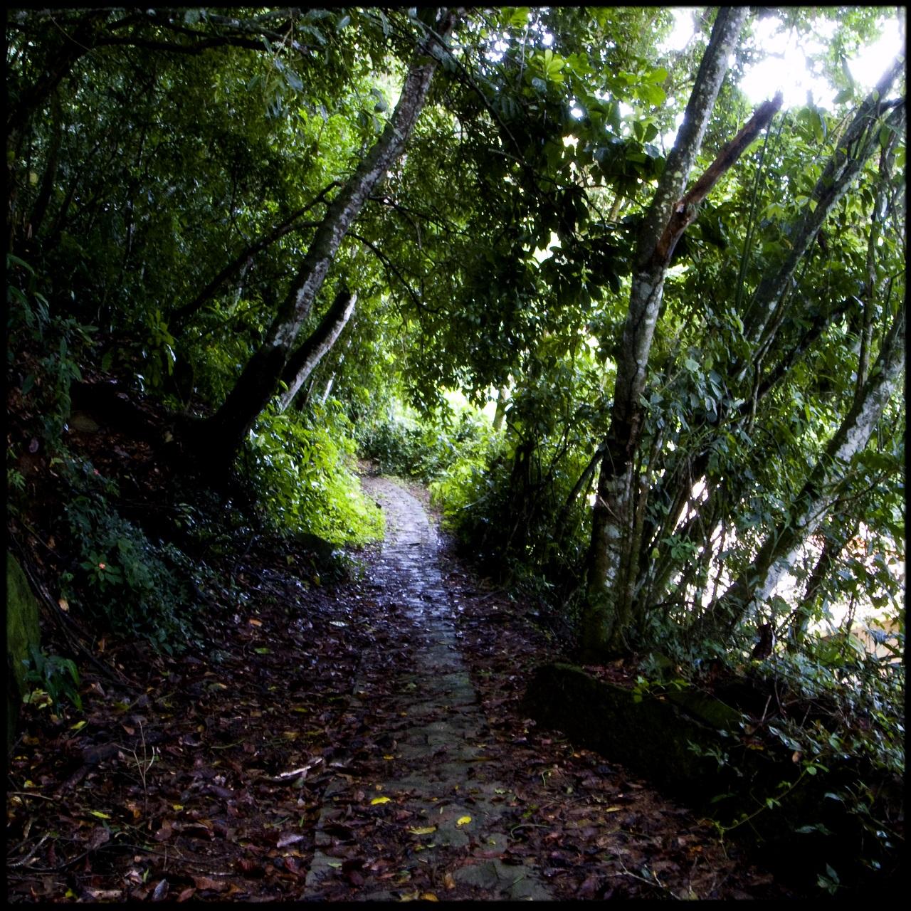 Março de 2009. Ilha da Gipóia, em Angra dos Reis