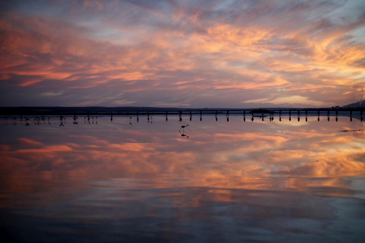 Lagoa Flamingo