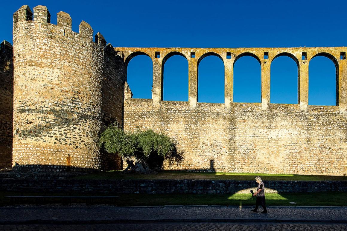 A oliveira milenar de Serpa;