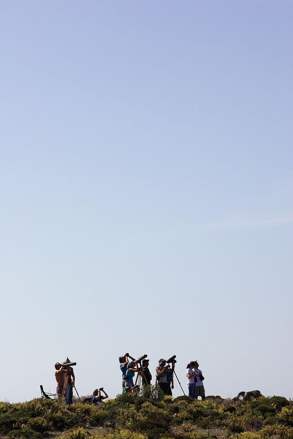 Birdwatching em Sagres