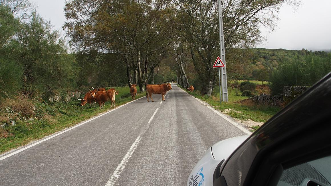 A caminho de Castro Laboreiro
