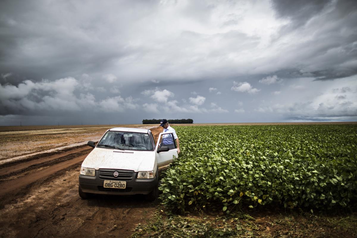 Brasil, Campo Novo do Parecis, estado de Mato Grosso - Plantações de soja - produtor de soja num campo onde houve uma demonstração da TMG sobre o seu programa de melhoramento genético de soja
