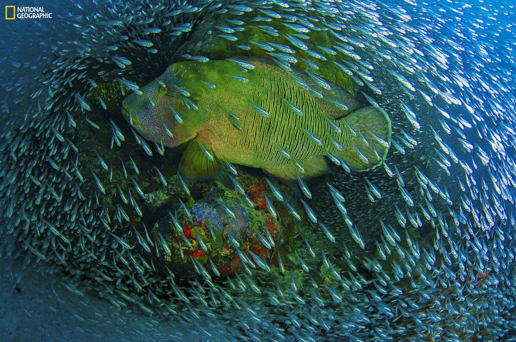 Menção honrosa Natureza: Christian Miller. Cairns, Grande Barreira do Coral, Austrália