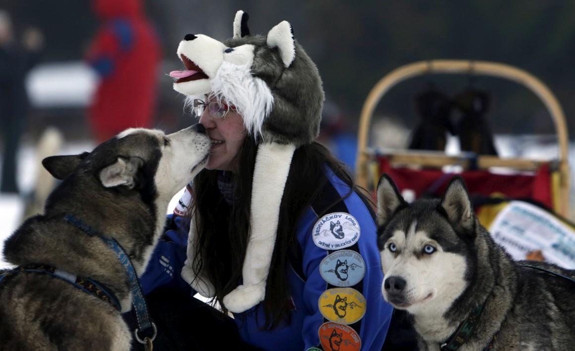 Cães da neve