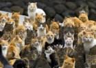 Ilha de gatos