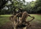 Vamos descansar nas árvores caídas de São Paulo