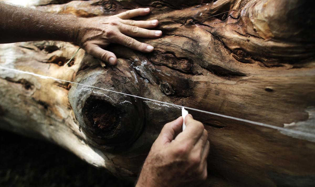 A preparar o corte de uma árvore