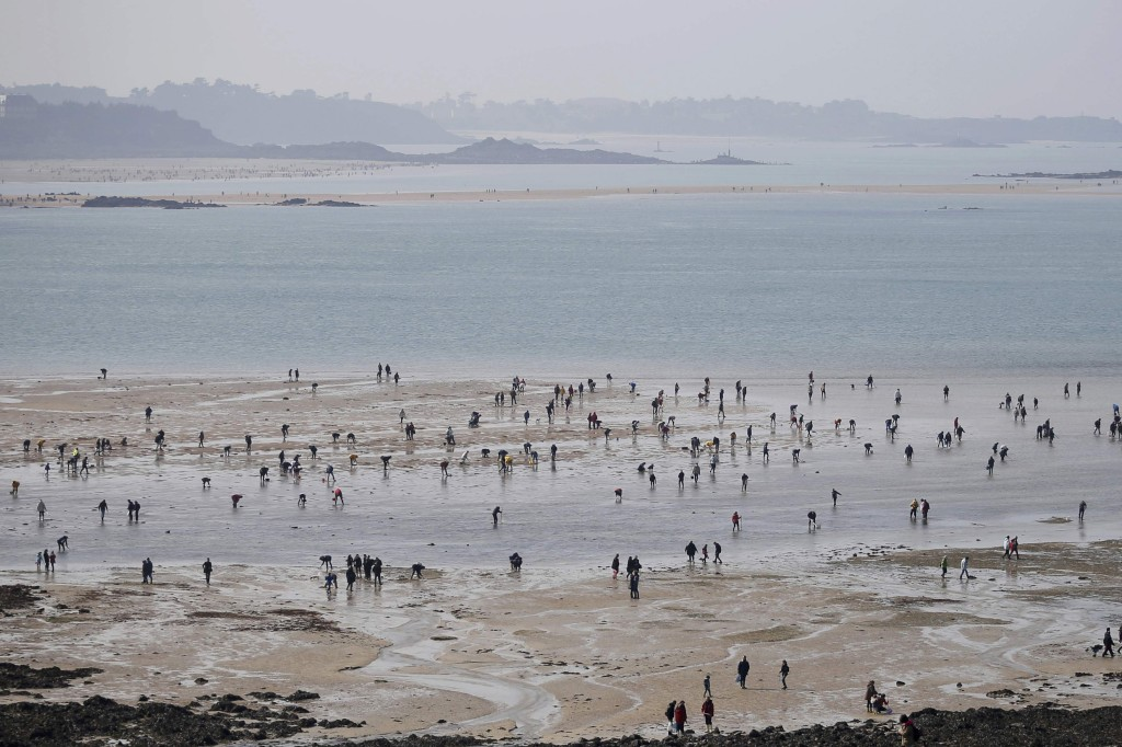 À procura de marisco numa maré excepcionalmente baixa em Saint Malo