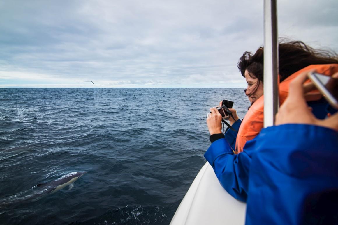 Uma viagem de barco para observação de baleias, cachalotes ou golfinhos