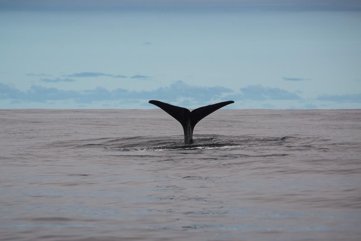 E, por fim, durante uma viagem de barco para observação de baleias, cachalotes ou golfinhos ..