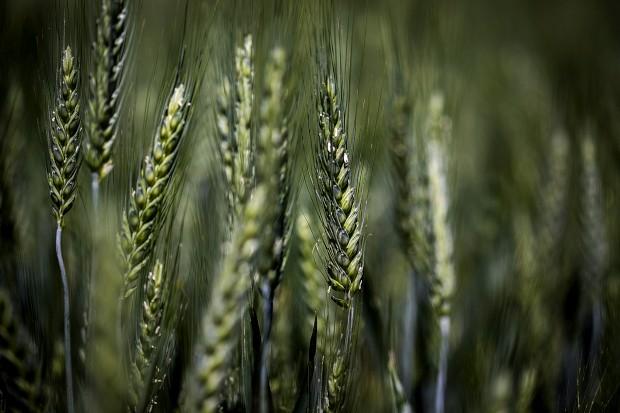 Com a agricultura chegaram as desigualdades