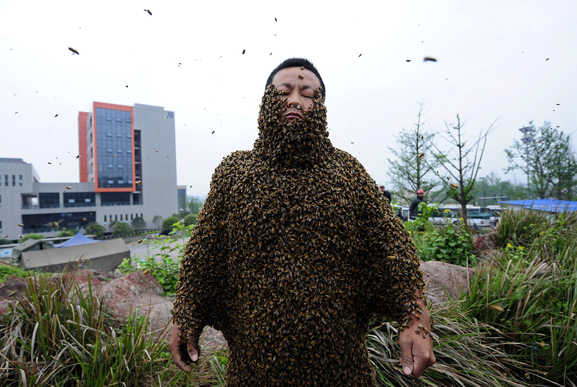 O apicultor chinês She Ping cobriu o corpo com 33,1kg de abelhas (cerca de 331 mil insectos), ultrapassando o último recorde de 26,8kg.