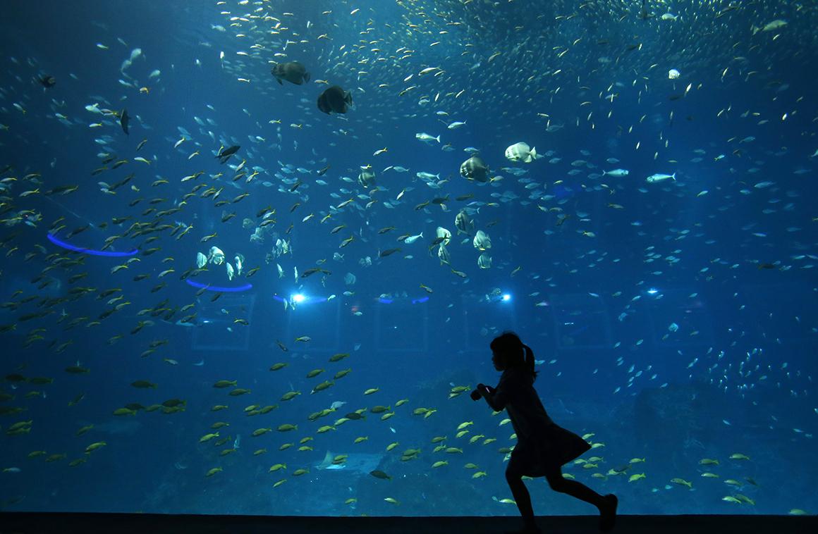 O S.E.A. Aquarium do Resorts World Sentosa, em Singapura, é o maior aquário do mundo. Tem 42,8 milhões de litros de água e abriga mais de 80 mil animais de cerca de 800 espécies.