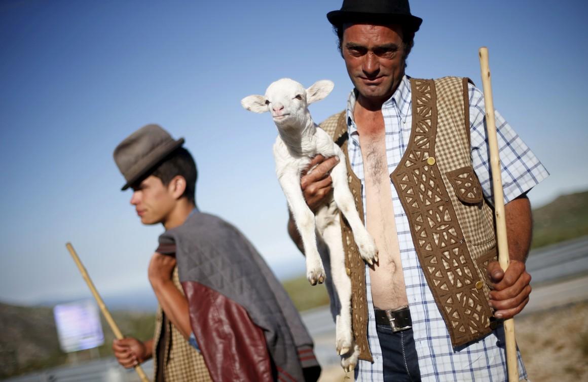 De rebanhos e pastores