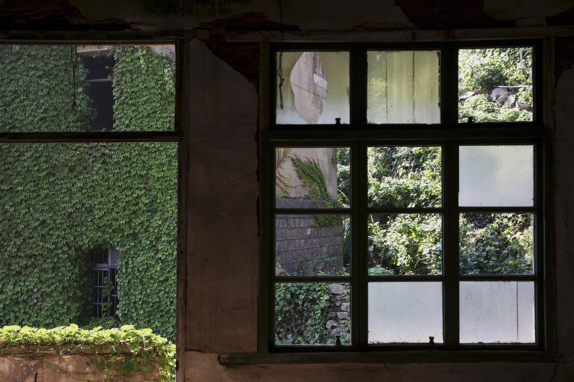 Um edifício coberto de vegetação é fotografado através das janelas partidas de uma casa vazia