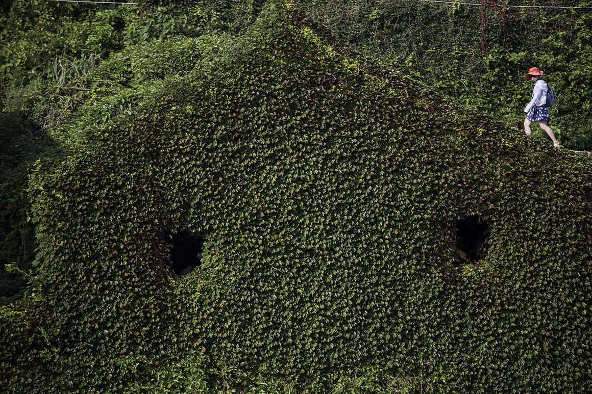A vegetação pinta o casario de verde, dominando a paisagem da vila