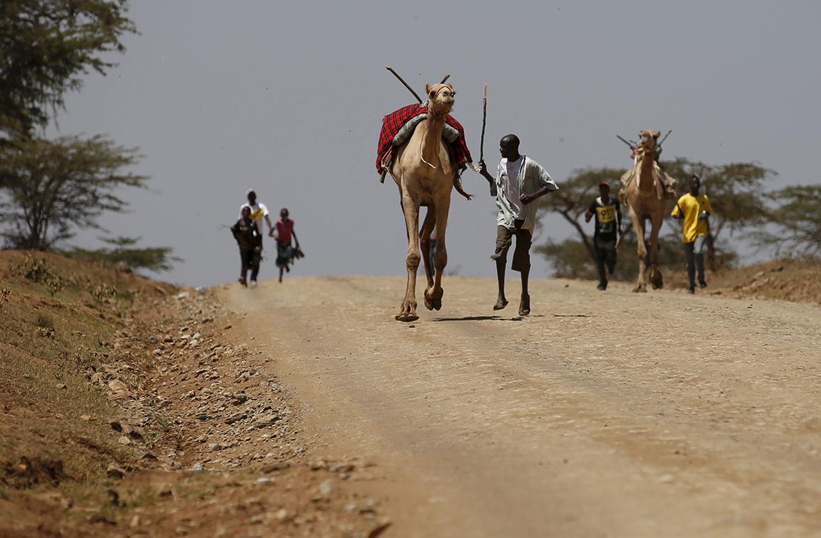 Um concorrente corre atrás do seu camelo durante uma corrida do Maralal Camel Derby