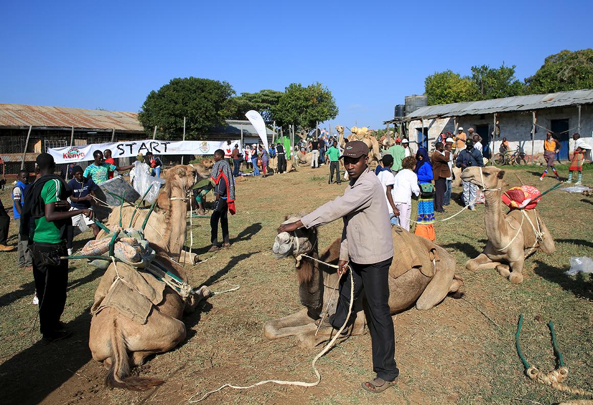 A cidade de Maralal organiza anualmente um festival de camelos, reunindo membros das tribos Samburu, Turkana e Pokot