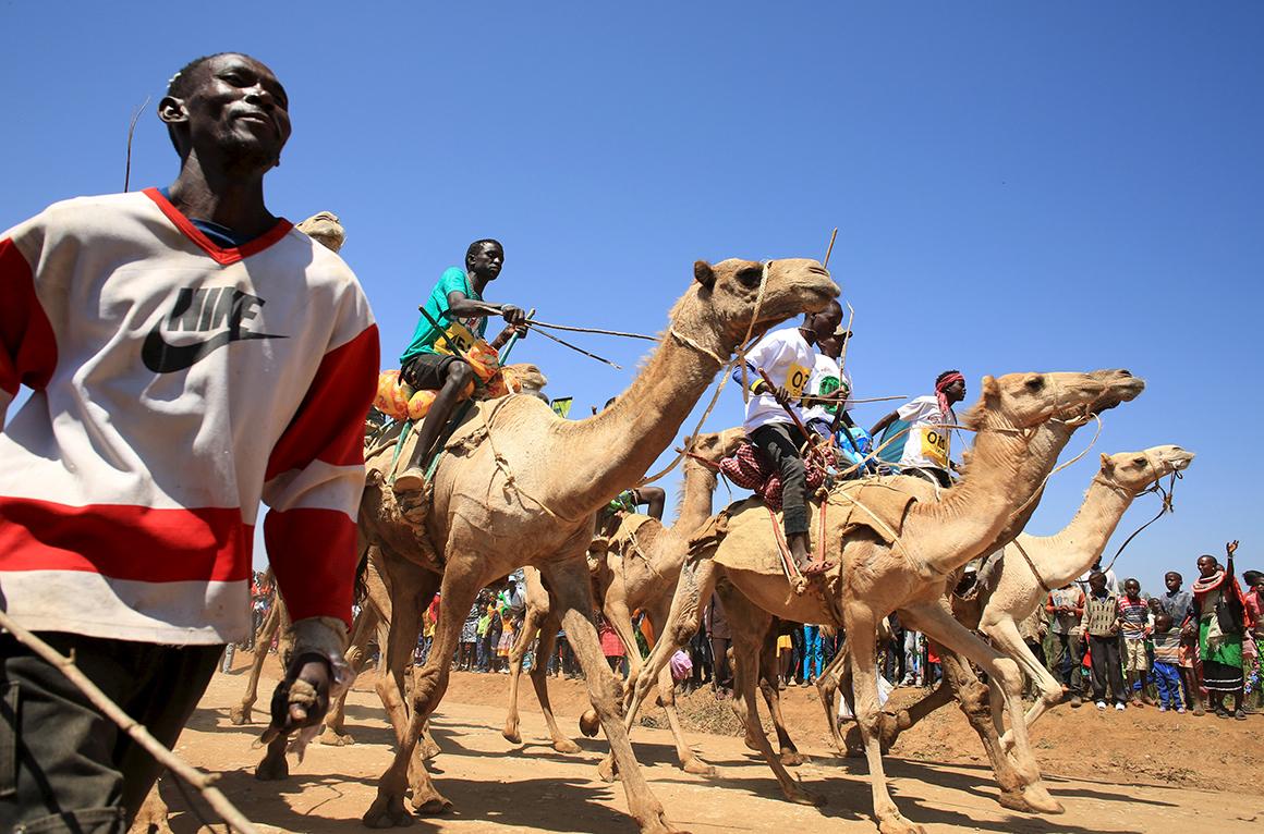 As corridas de camelos são atracção principal do festival