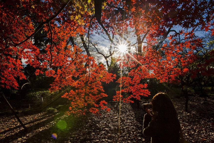 Jardim Nacional de Shinjuku Gyoen, Tóquio (Japão)