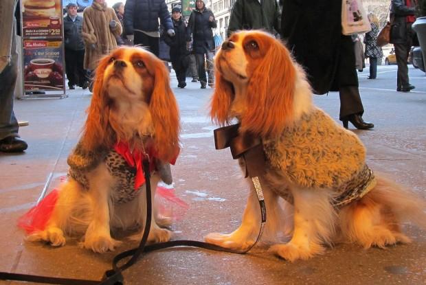 Há uma linha de roupa para cães no Canadá que fala português