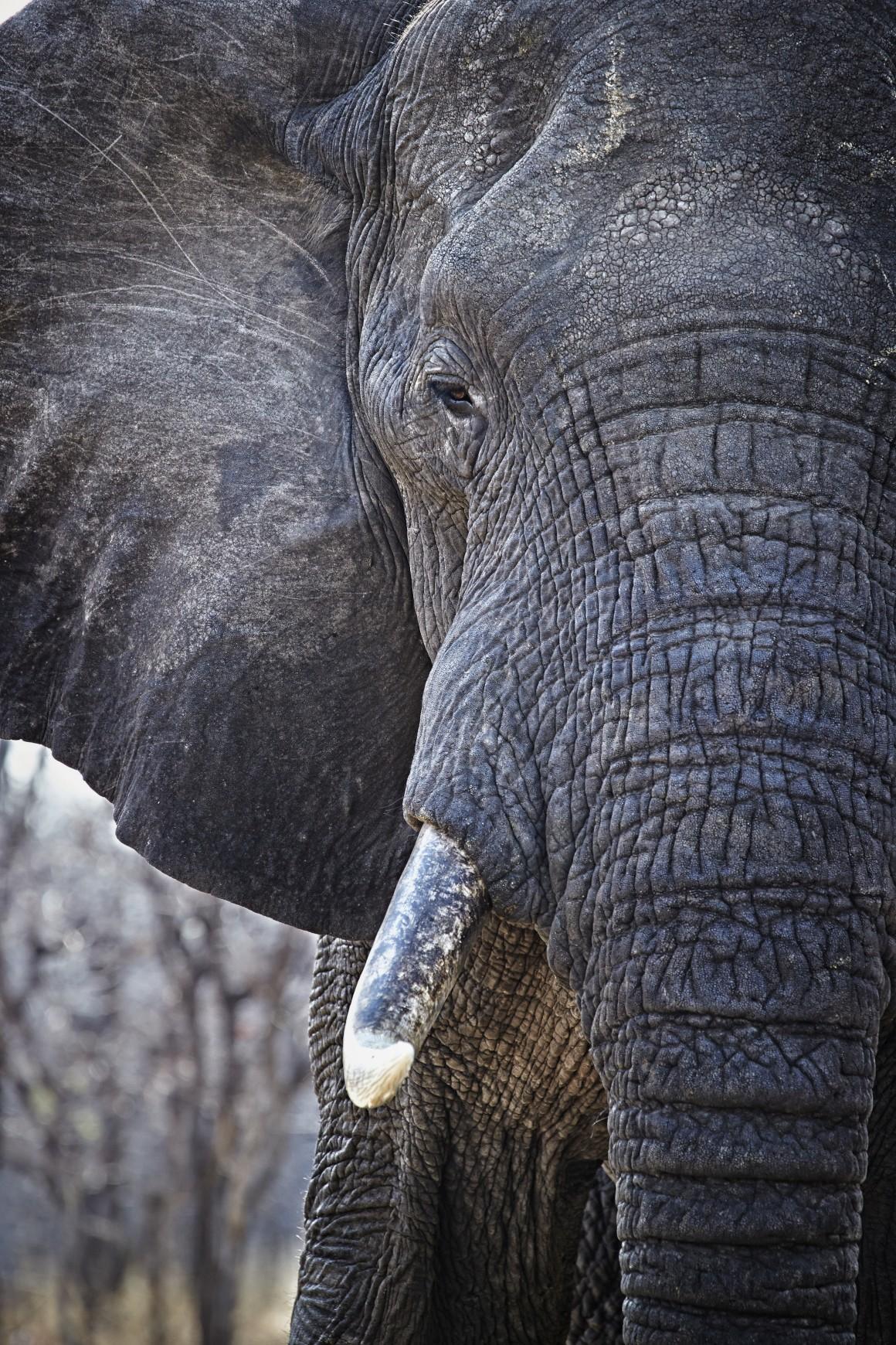 MALAWI. Parque Nacional de Liwonde