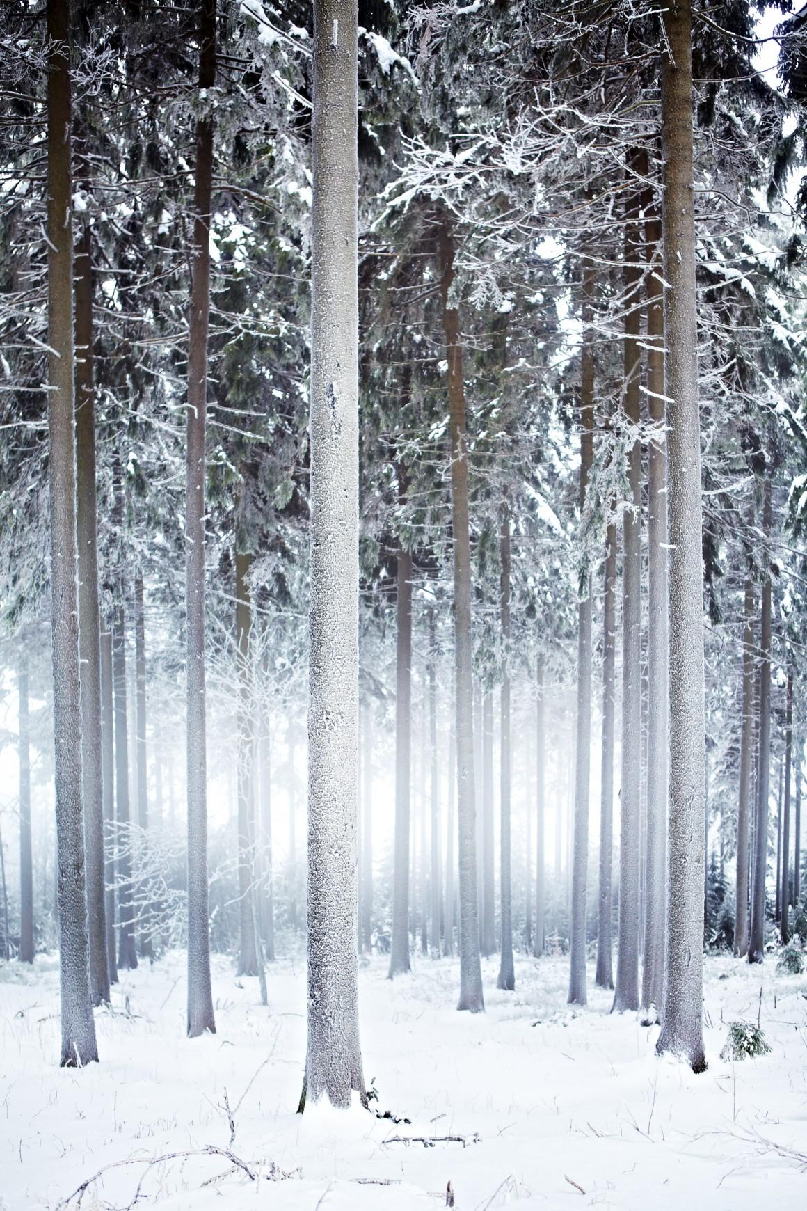 ALEMANHA, Floresta de Turíngia