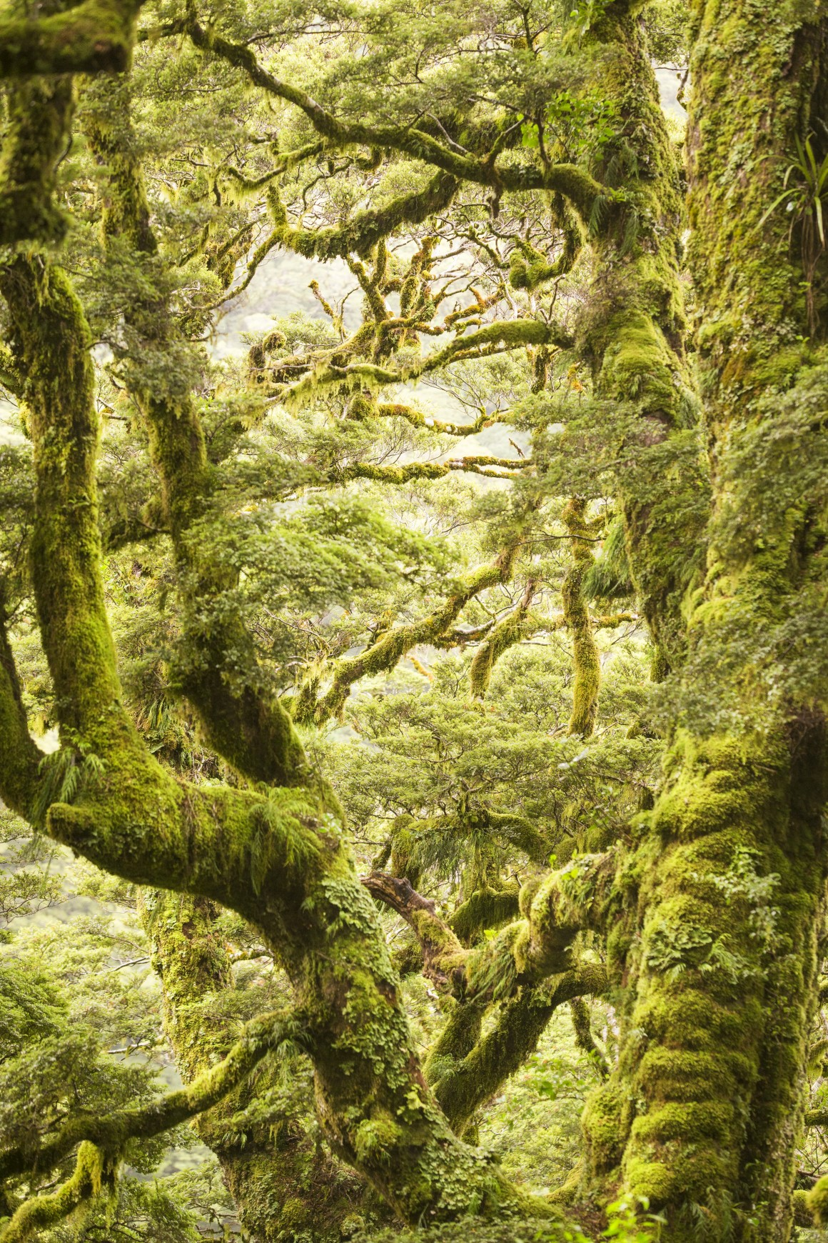 NOVA ZELÂNDIA, Parque Nacional de Monte Aspiring