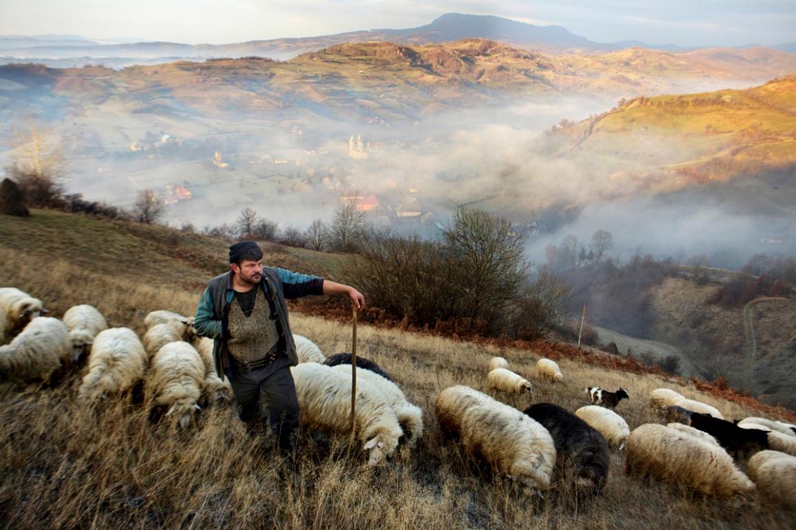 Rostos, Pessoas, Encontros. Vencedor Mitchell Kanashkevich (Austrália). Na imagem: o pastor com o seu rebanho em Maramures, Roménia