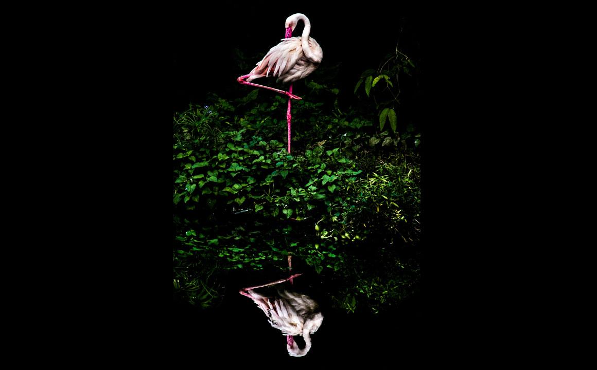 Finalista na categoria Open (Natureza e Vida Selvagem), aberta a fotógrafos não-profissionais