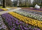 7 milhões de flores