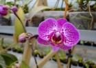 A colecção de orquídeas