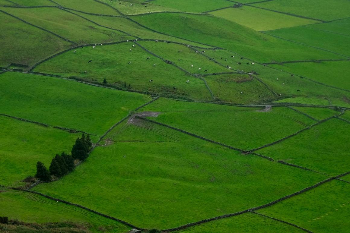 AÇORES - Campos da ilha Terceira