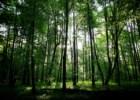A última floresta primitiva da Europa